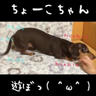 遊ぼう\(^o^)/